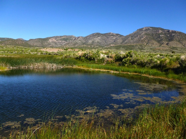 Great Basin spring.  Photo credit: Protect Goshute Water