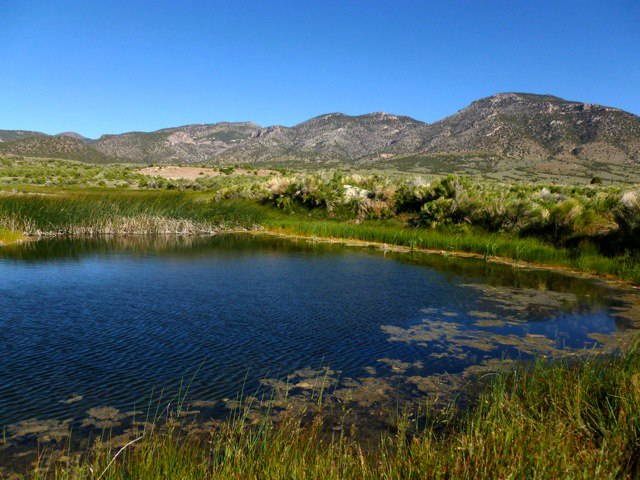 This is a pond on the Goshute Reservation, below the Deep Creek Mountains. This place will be turned to barren desert if the SNWA pipeline project goes through. Photo via Stop the SNWA Water Grab.